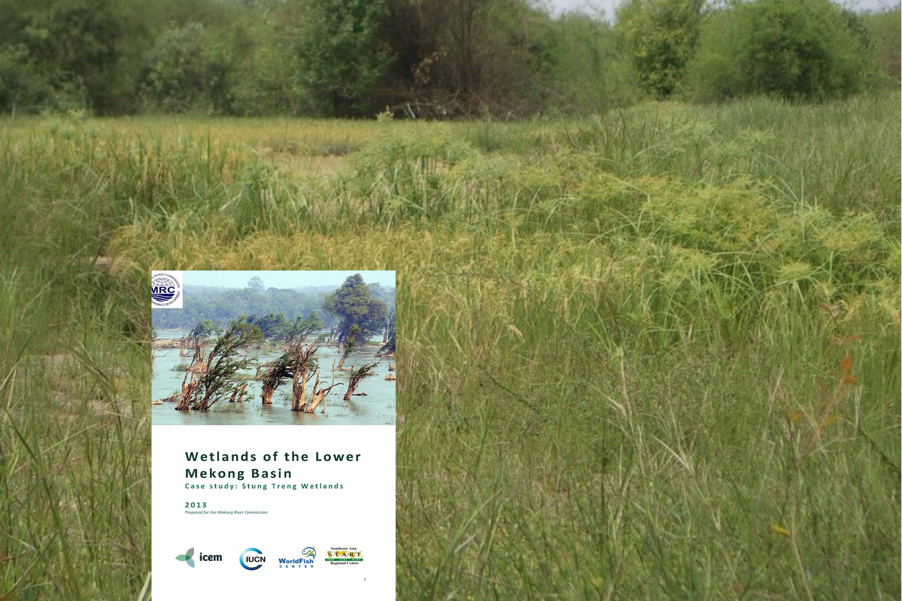 ASSESSMENT OF WETLAND MITIGATION PROJECTS IN OHIO