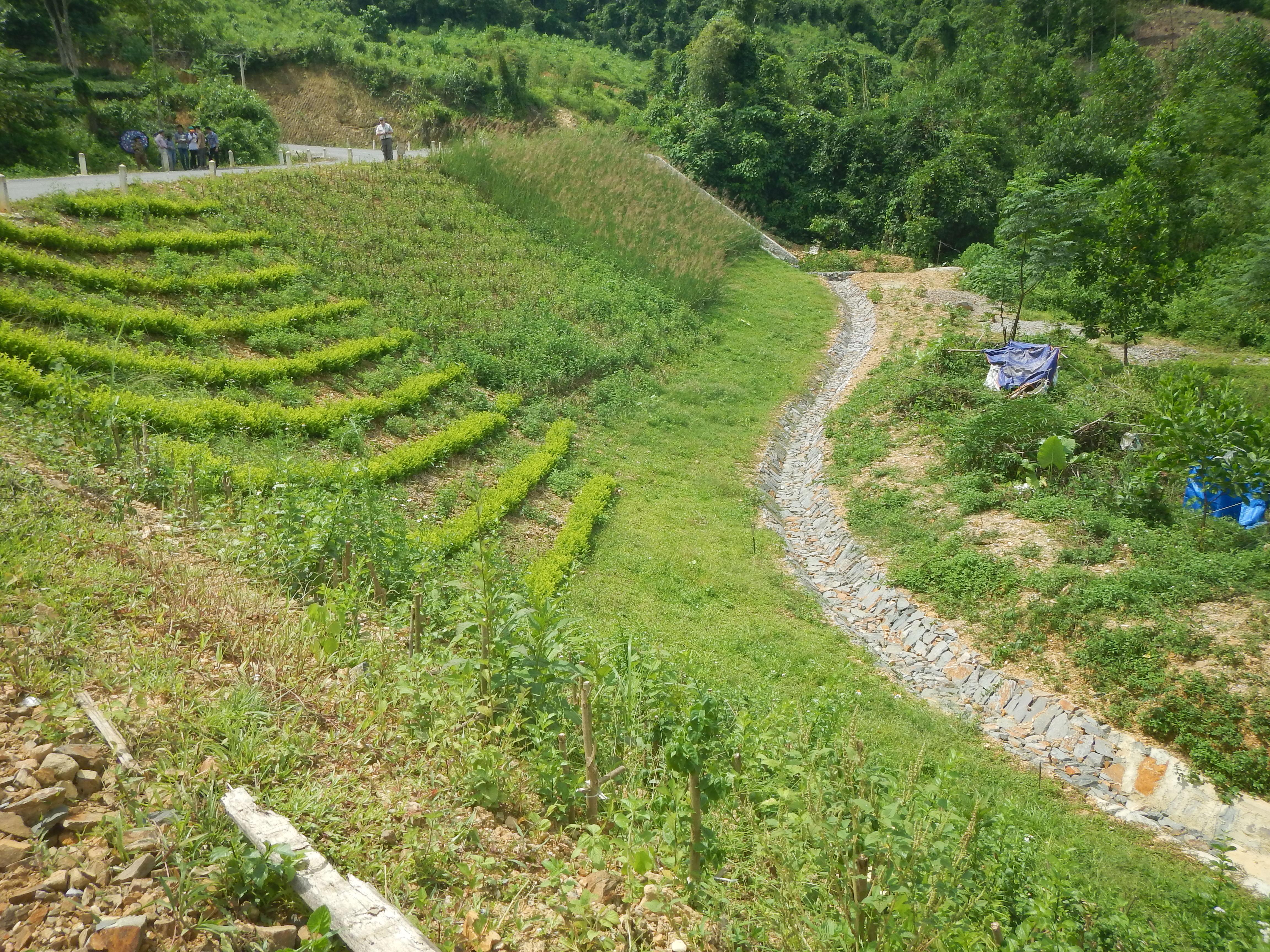 Bioengineering demonstration protecting roadside slope in Thai Nguyen Province, Vietnam